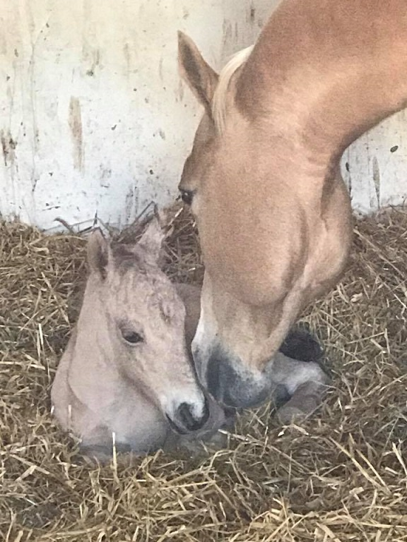 Newborn filly with Chexy