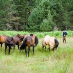 Horseback-UK-Community-Leadership-Courses-33