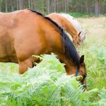 Horseback-UK-Community-Leadership-Courses-36