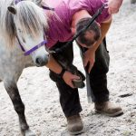 Horseback-UK-Corporate-Leadership-Courses-16