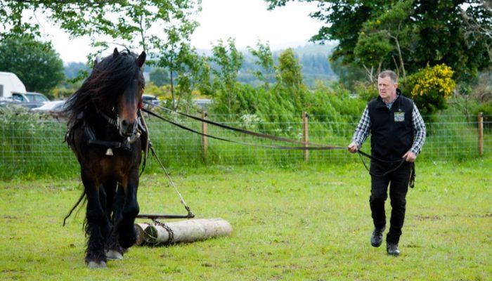 Horseback-UK-Corporate-Leadership-Courses-88