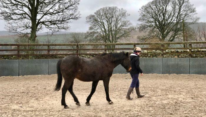 Horseback-UK-Schools-Leadership-Courses-6