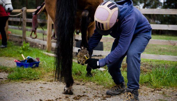 Horseback-UK-Schools-Leadership-Courses-69