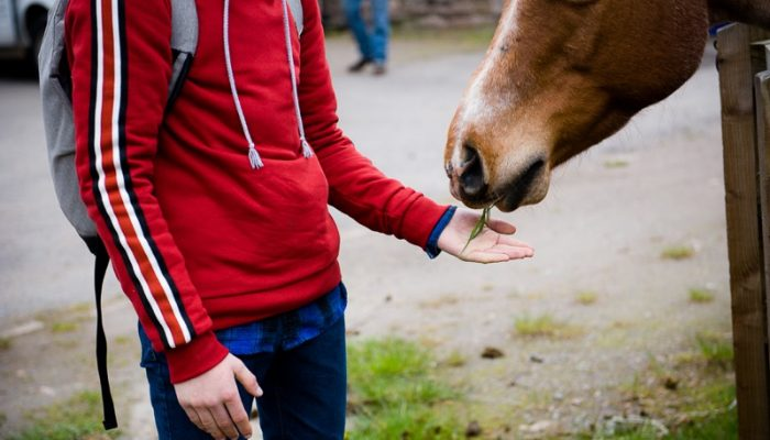 Horseback-UK-Schools-Leadership-Courses-79